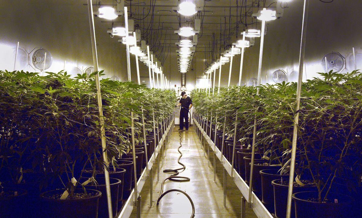 Nación Cannabis | Las 5 firmas cannábicas más poderosas del mercado: oportunidad para invertir