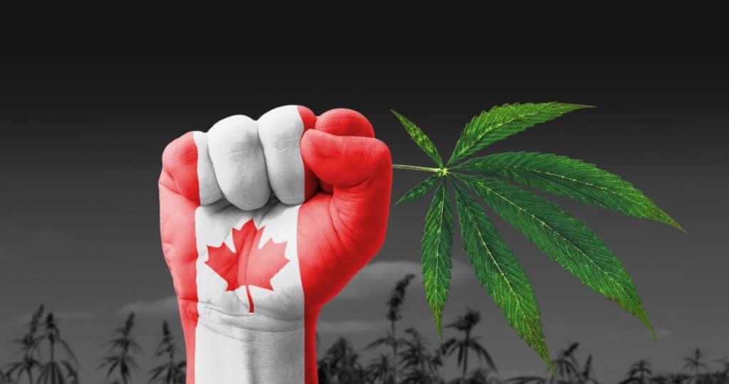 Escasez de marihuana en Canadá