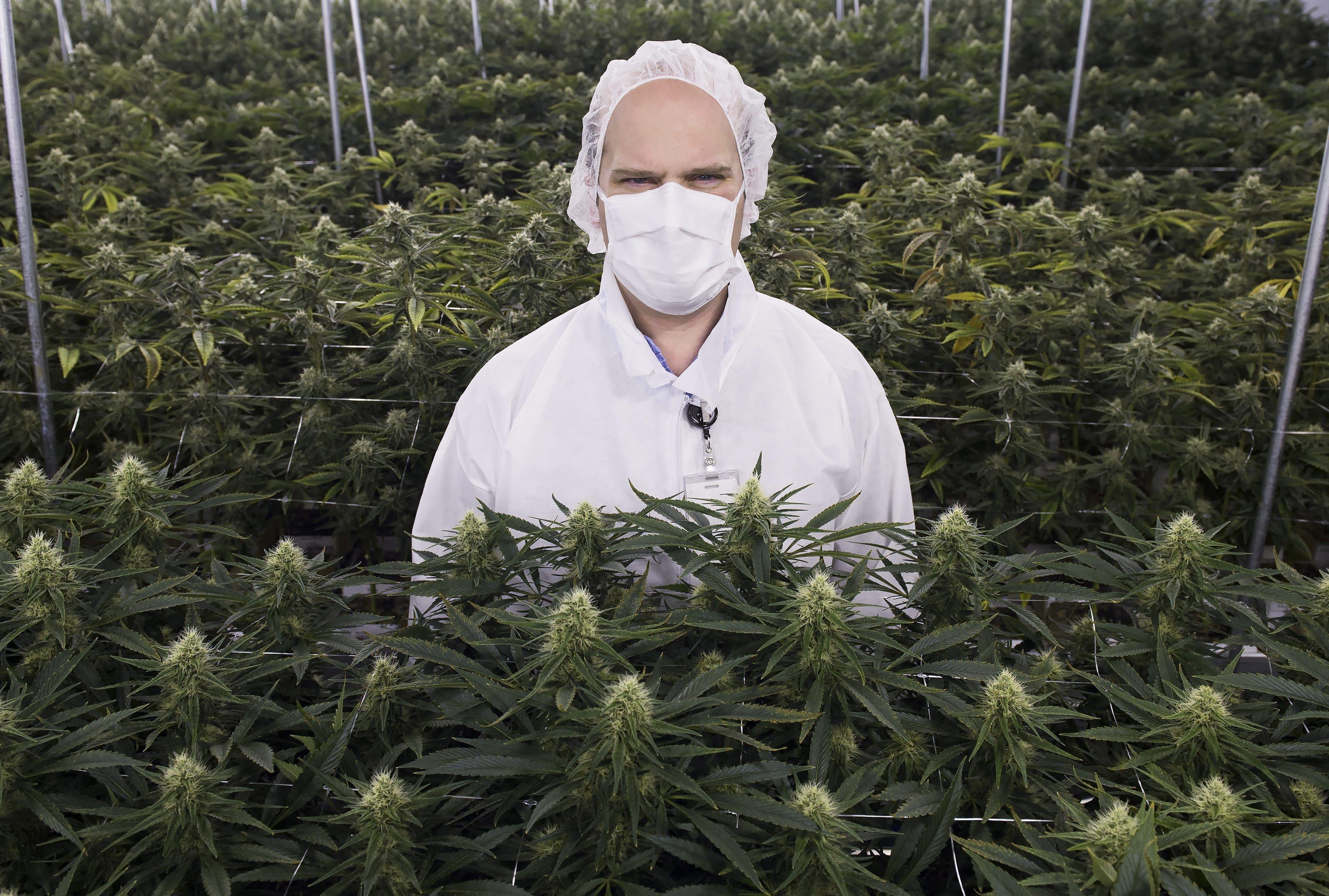 Nación Cannabis | Productores en Estados Unidos exigen una certificación nacional para la cannabis orgánica