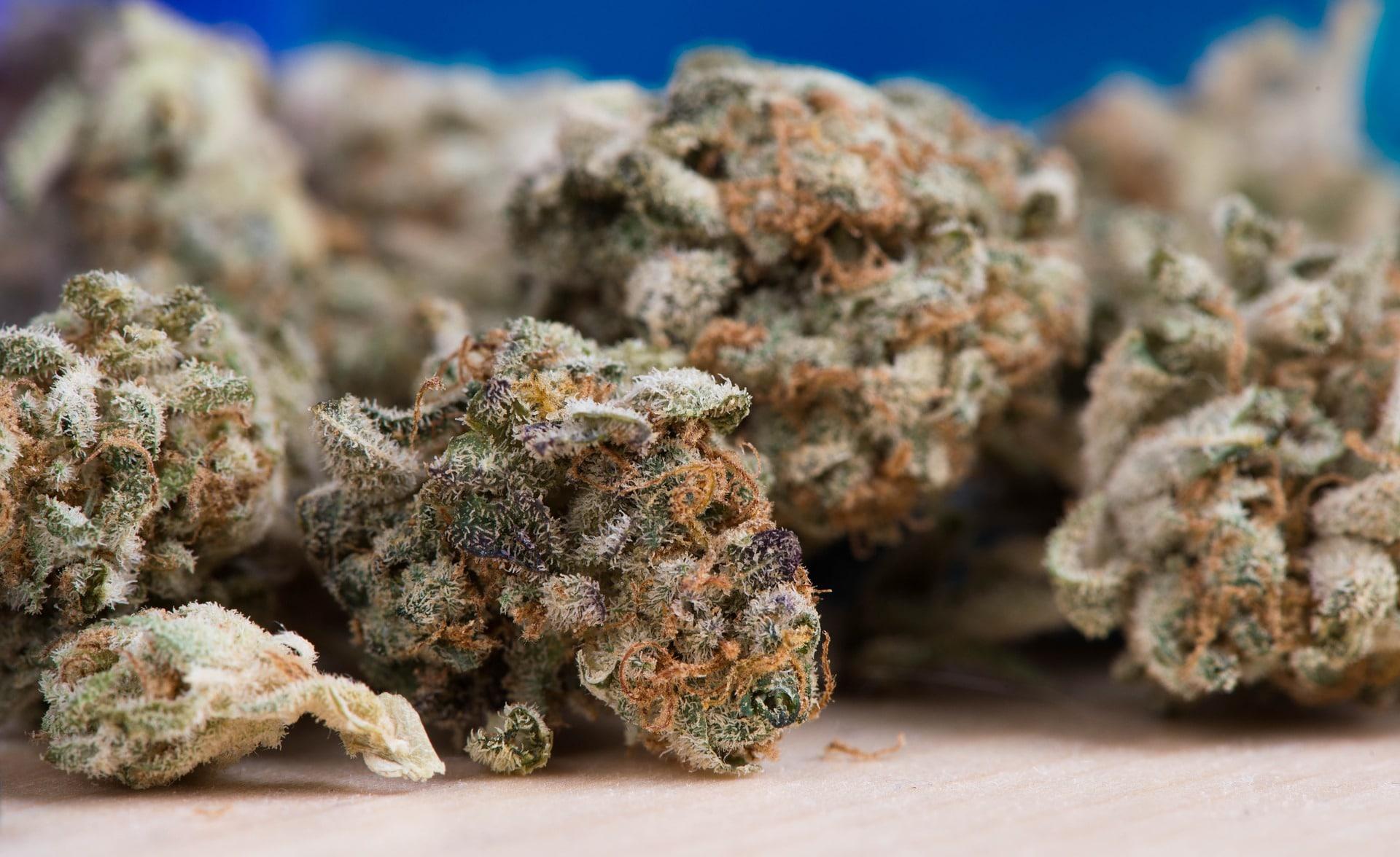 Uruguay y Canadá en legalización de marihuana