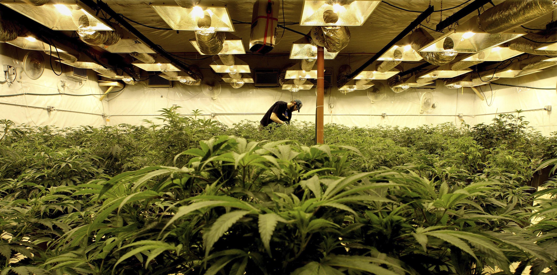 Nación Cannabis | Consejos de un emprendedor en la industria de la cannabis: No esperes a que se legalice, invierte ya