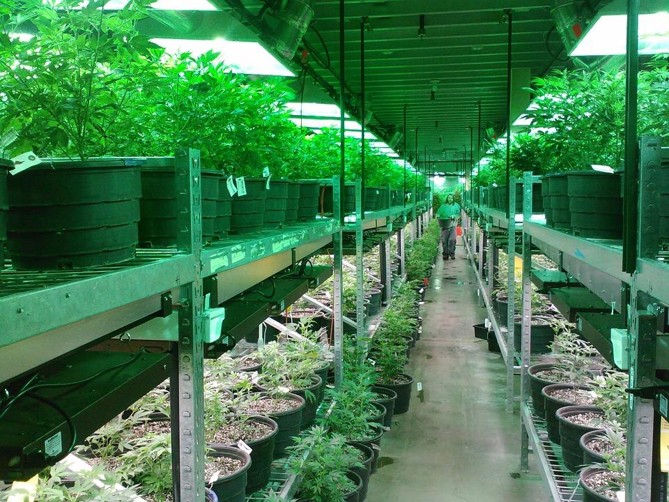 Nación Cannabis | España podría ser el jardín de cannabis europeo