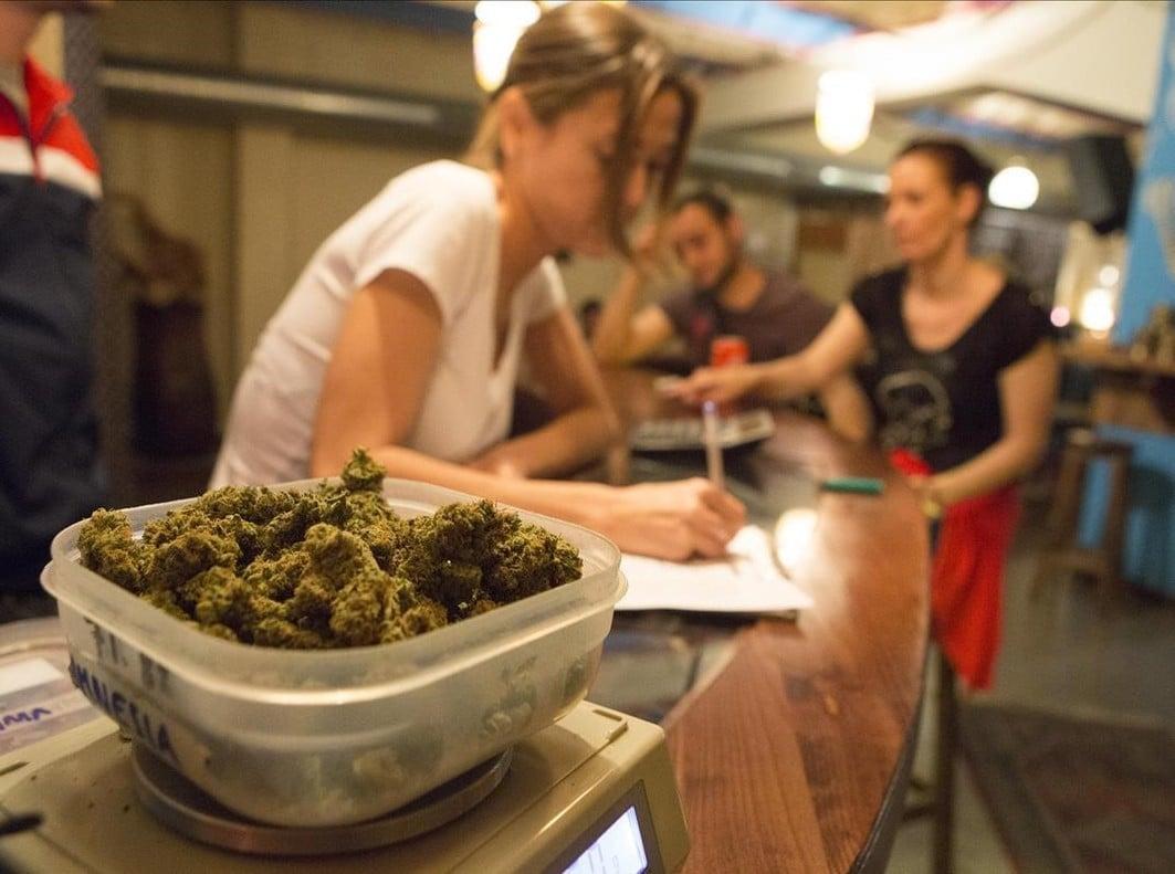Nación Cannabis | Cataluña aprueba uso de marihuana medicinal y recreacional