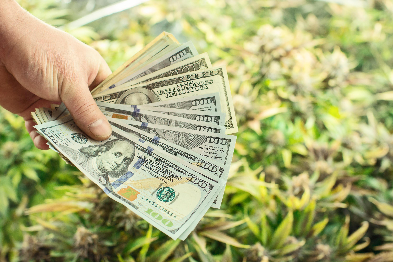 Nación Cannabis | Anuncian fondo de 50 mdd para capitalizar empresas de cannabis