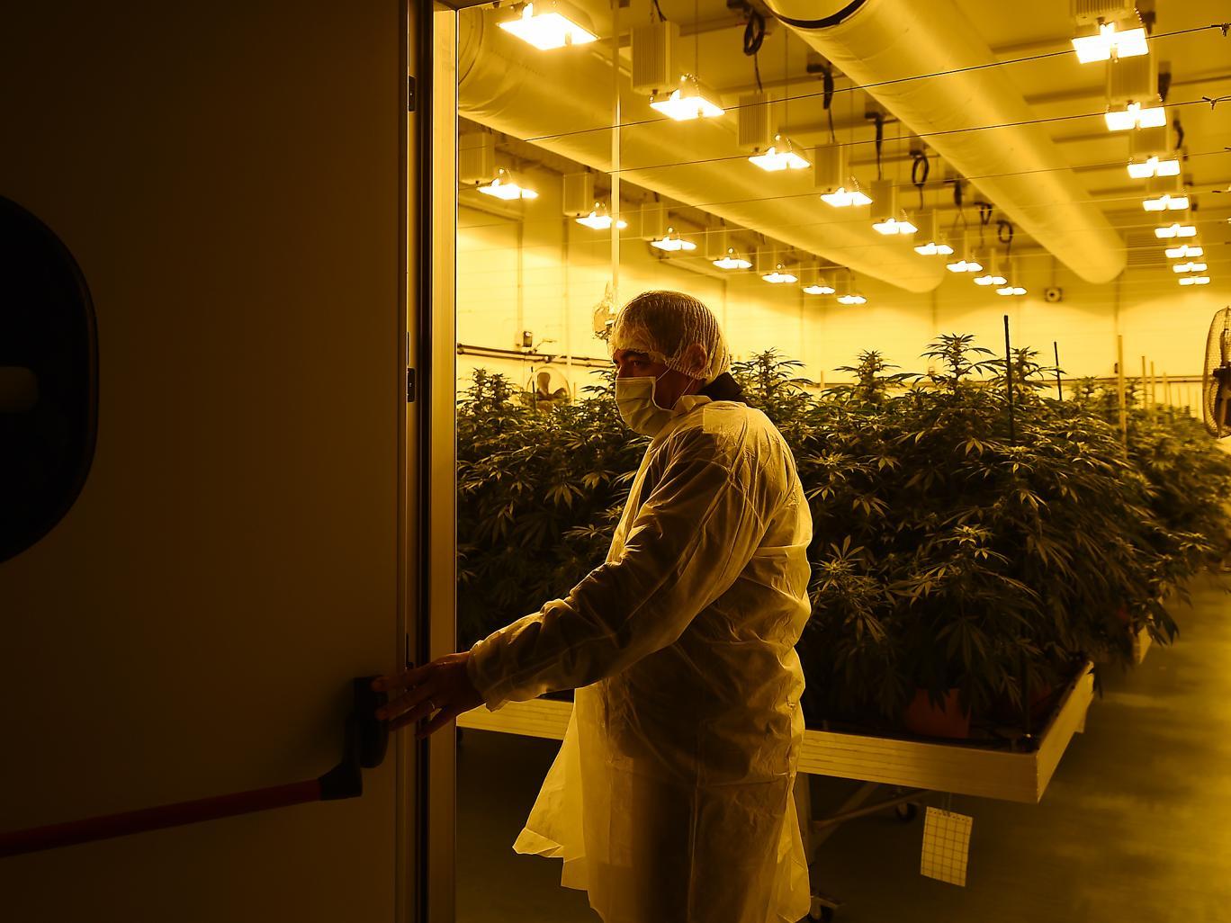 Nación Cannabis | Imperial Brands busca diversificar su negocio tabacalero
