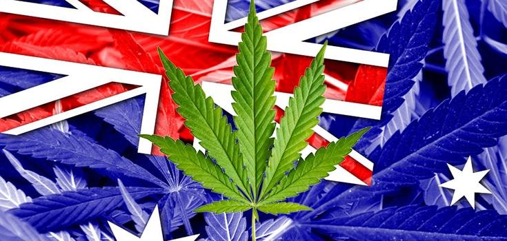 Nación Cannabis | ¿Por qué ha caído el uso de cannabis en Australia?