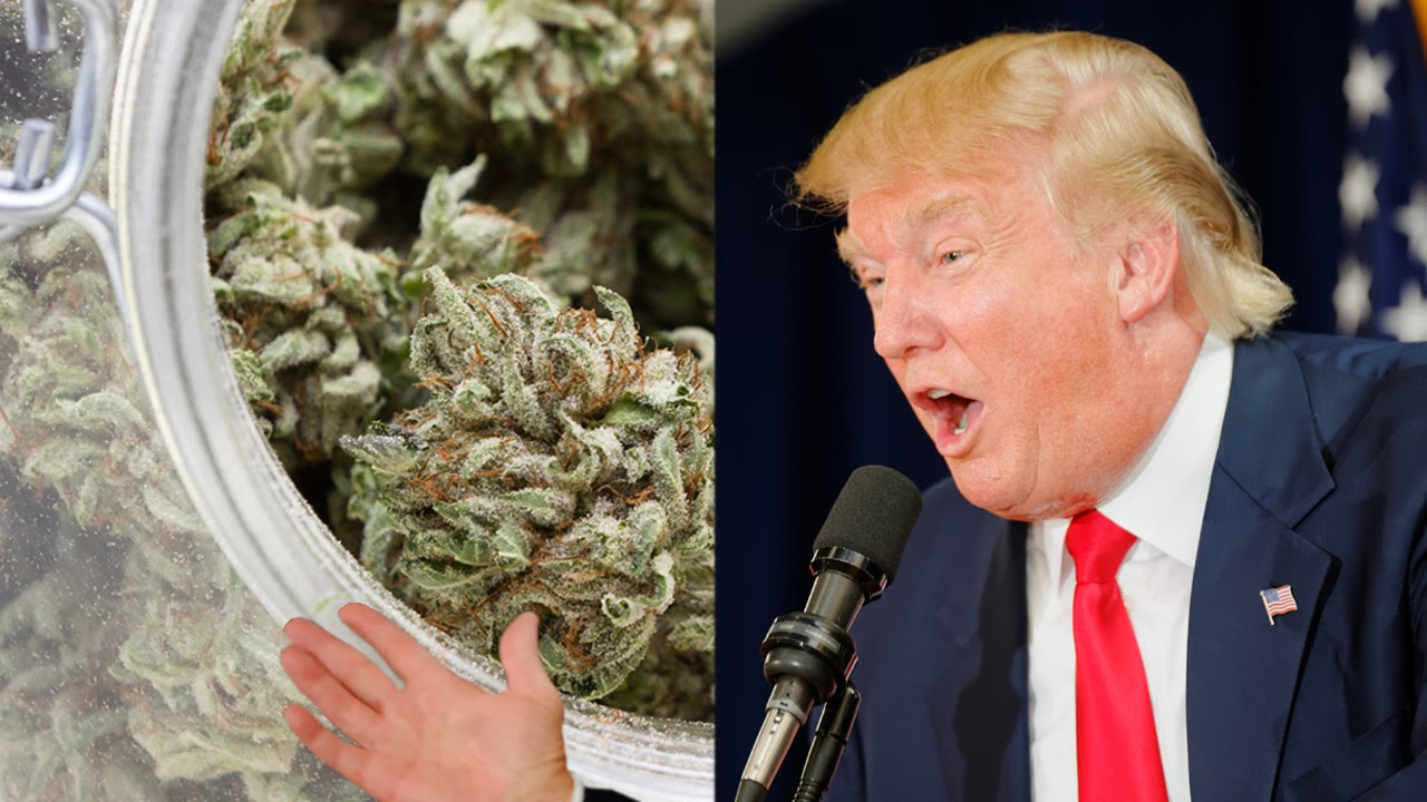 Nación Cannabis | Inversiones en cannabis continúan pese a rechazo de Trump