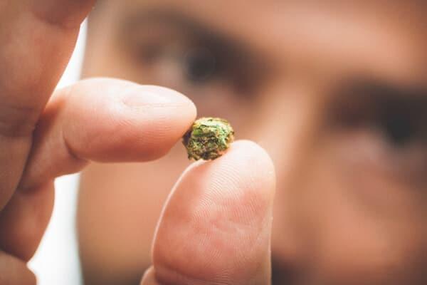 Nación Cannabis | Microdosis de marihuana: futuro de la terapia medicinal
