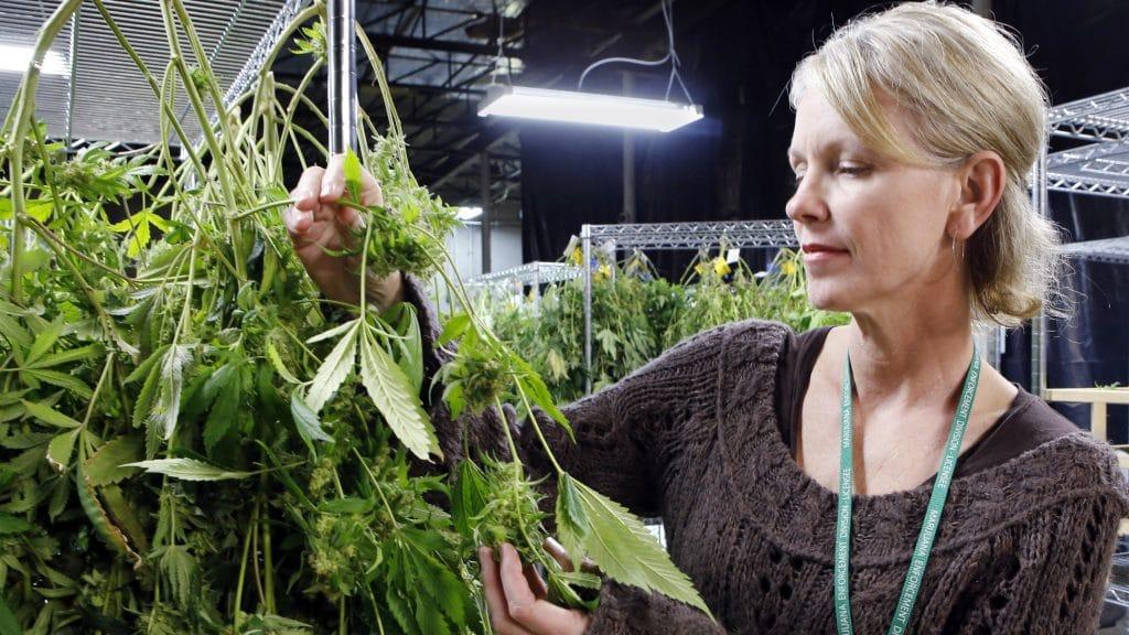 Mujeres empoderadas en la industria de cannabis