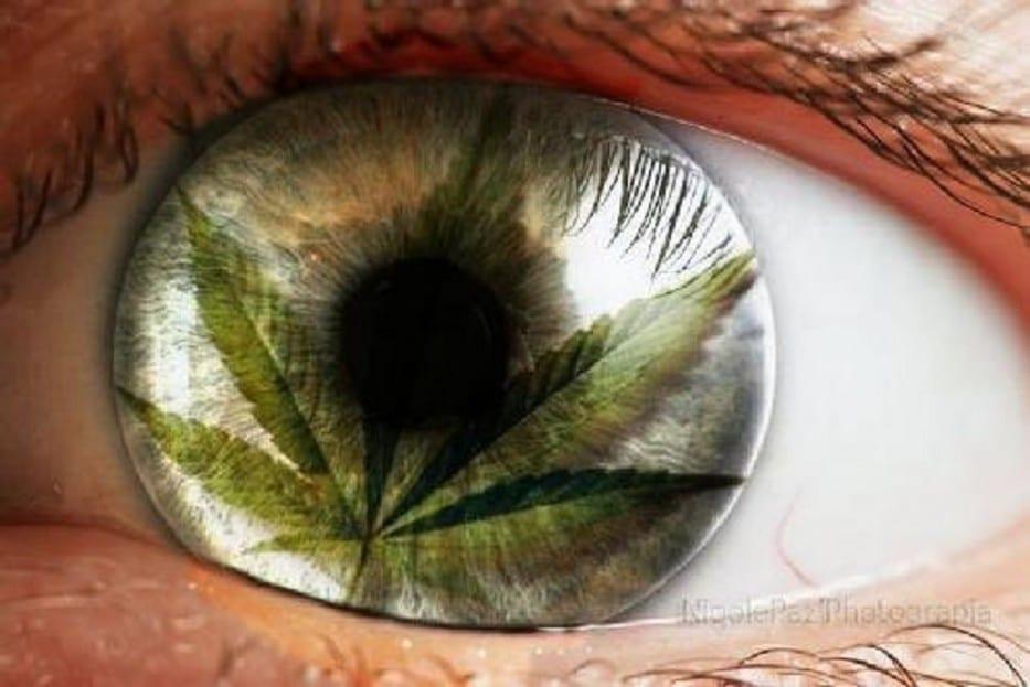 Nación Cannabis | Cannabis para la salud ocular