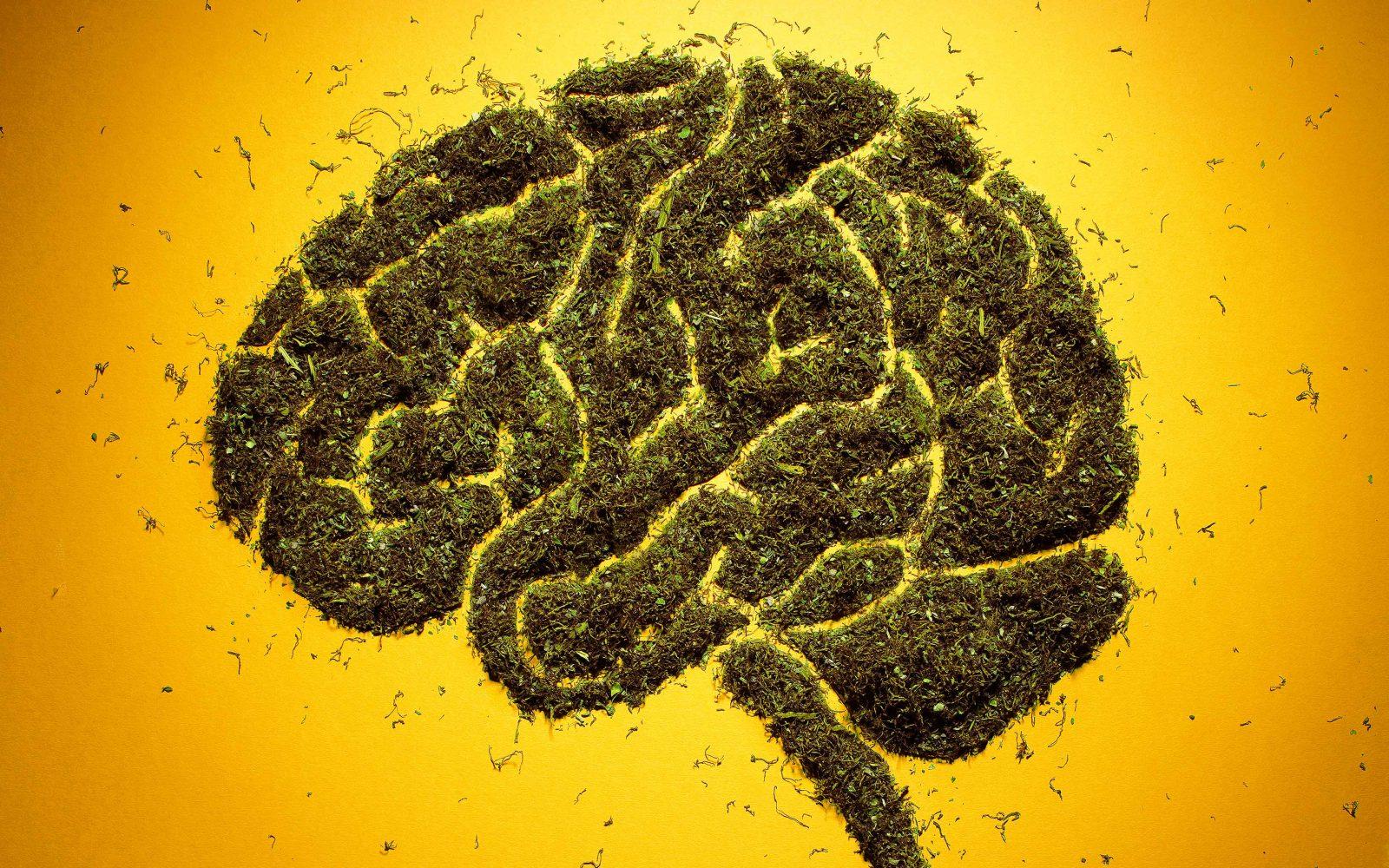 Disminuye riesgo de accidente cerebrovascular con la hierba