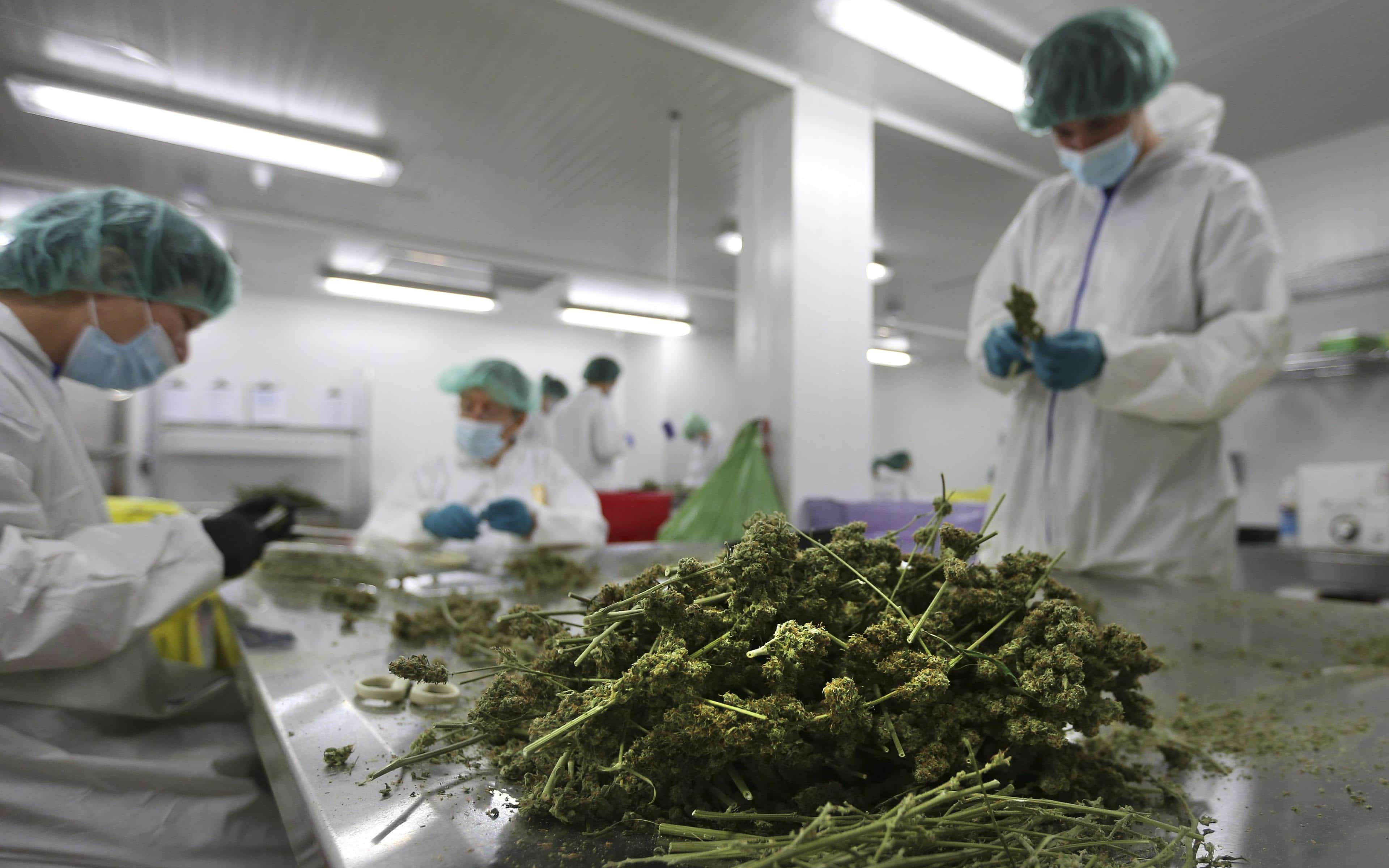 Nación Cannabis | Uno de los más grandes laboratorios de cannabis en Washington ha sido suspendido