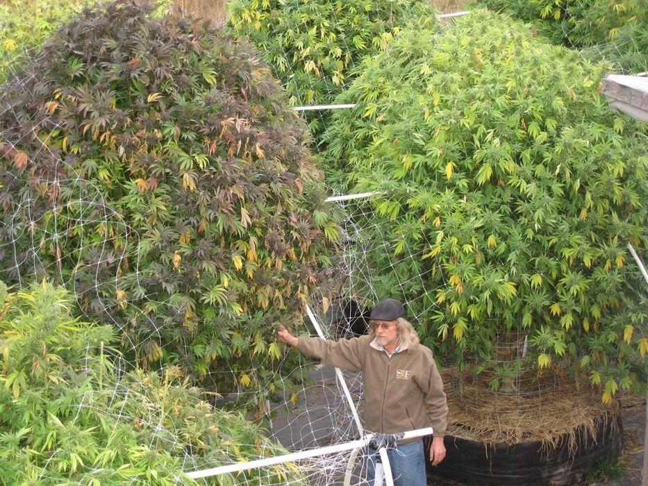Nación Cannabis | El arte del cultivo personal de marihuana