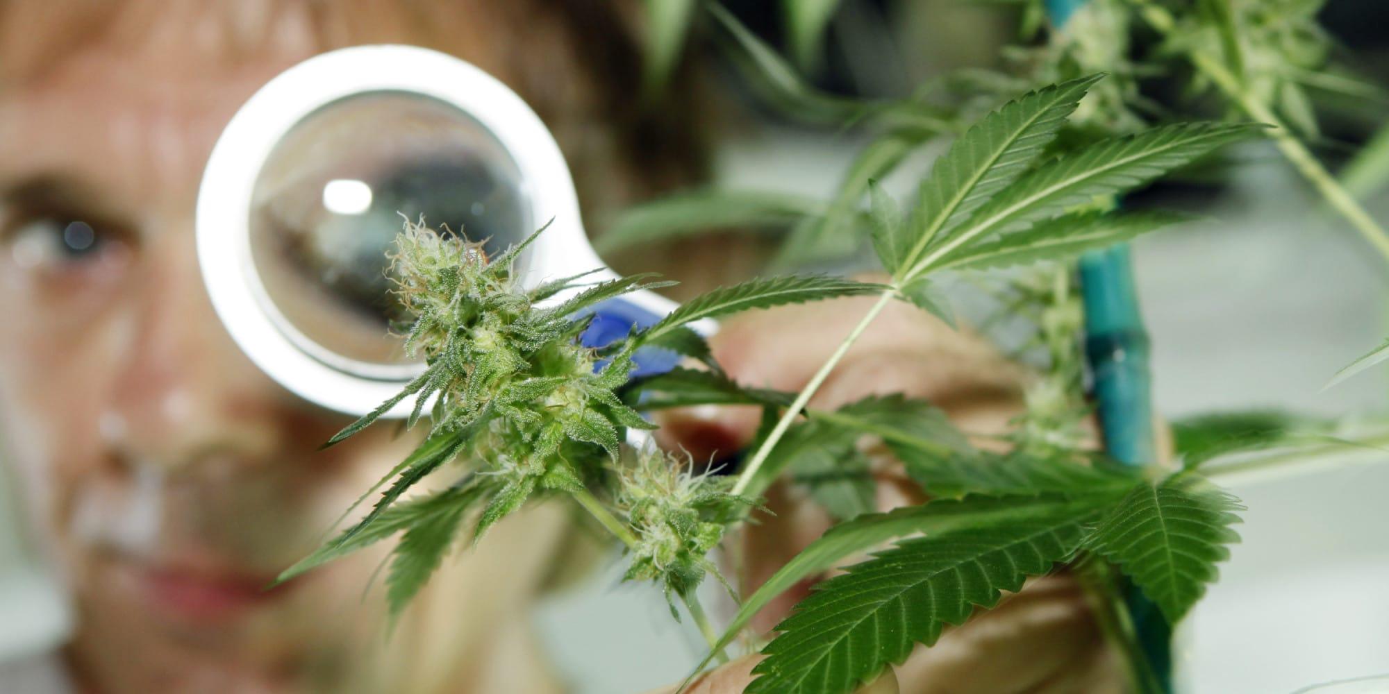 Nación Cannabis | Tratamiento de esquizofrenia y síndrome de Tourette