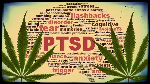 Nación Cannabis | Buscan ampliar a 43 las condiciones médicas a tratar en New Jersey