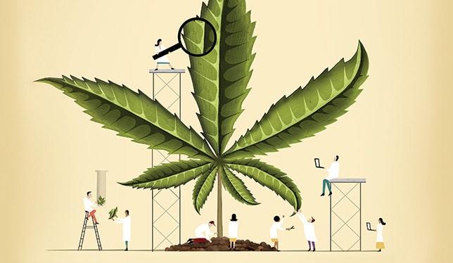 Nación Cannabis | Universidades americanas comienzan a ofrecer cursos relacionados con la cannabis y su industria