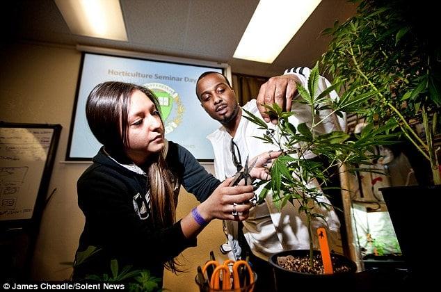 Nación Cannabis | Además de cursos de cannabis, las universidades de EU buscan cultivar marihuana medicinal