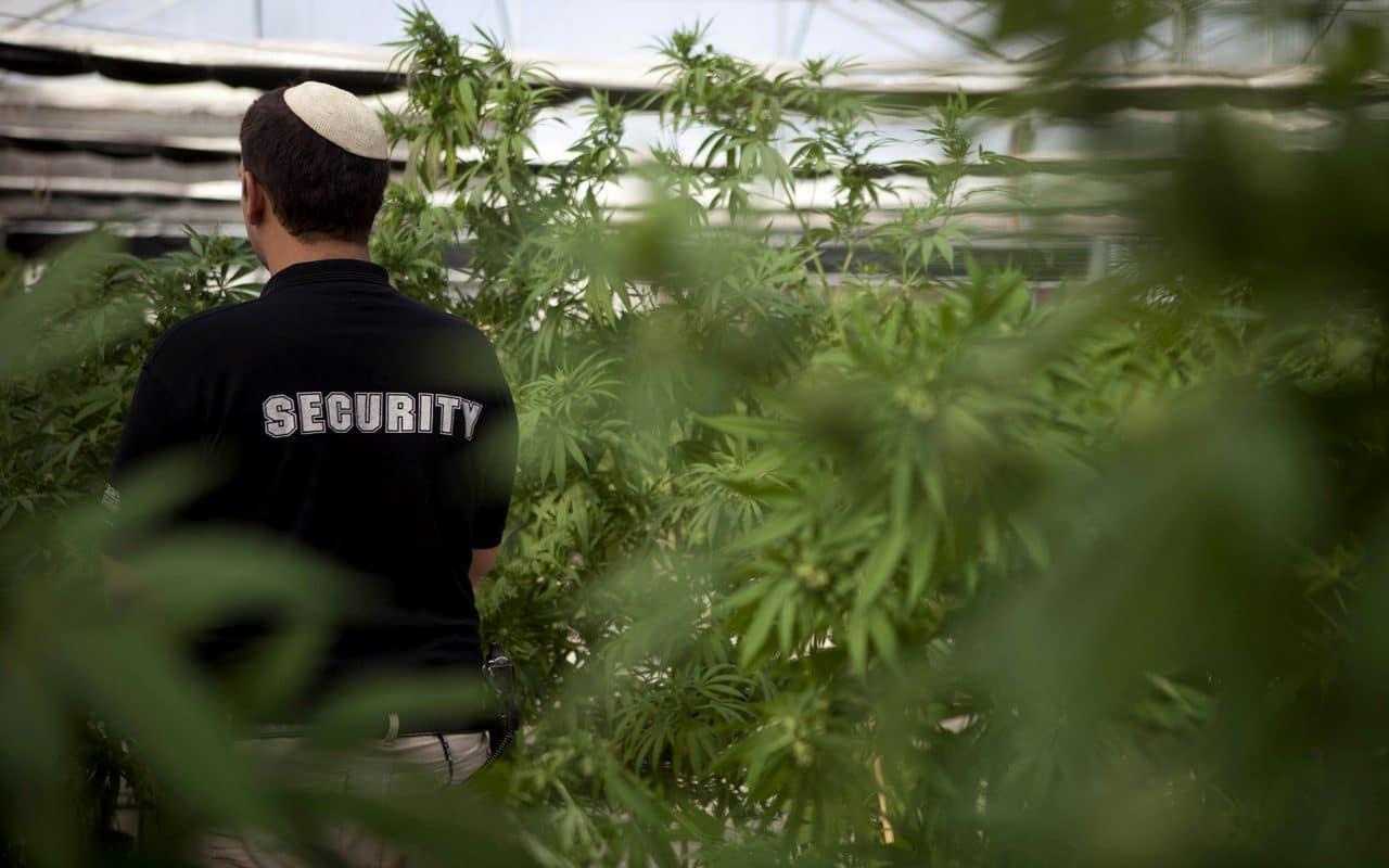 Nación Cannabis | Empresas cannábicas de Israel se alistan para exportar