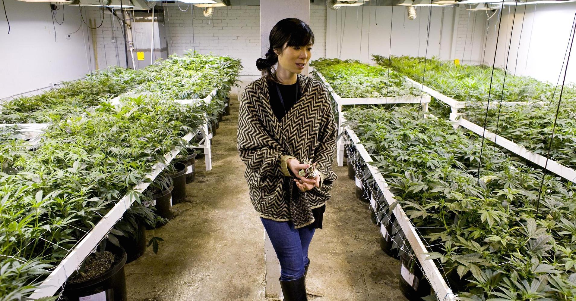Nación Cannabis | Hasta 150,000 nuevos empleos en Canadá, gracias a la industria de cannabis