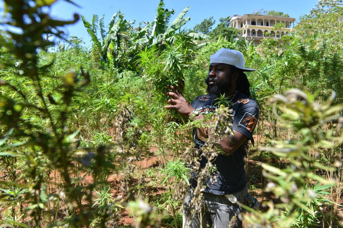 Nación Cannabis | África podría ser el próximo gigante de la cannabis en el mundo