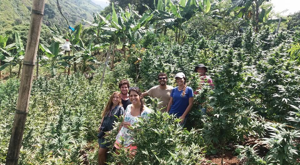 Nación Cannabis | Cannabis Tour, el viaje por los cultivos colombianos que está promoviendo la paz social y el desarrollo de la industria