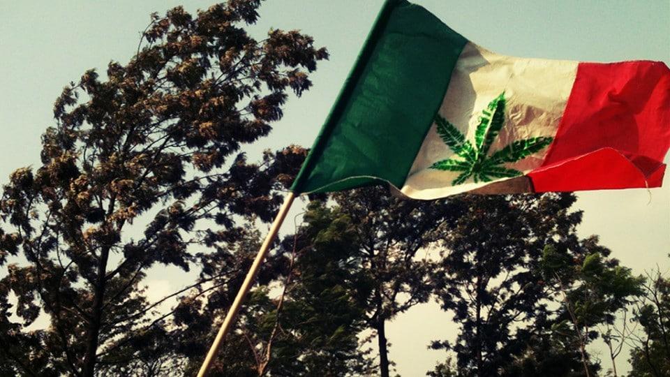 Nación Cannabis | Es oficial: se autoriza la siembra y cosecha de marihuana con fines médicos en México