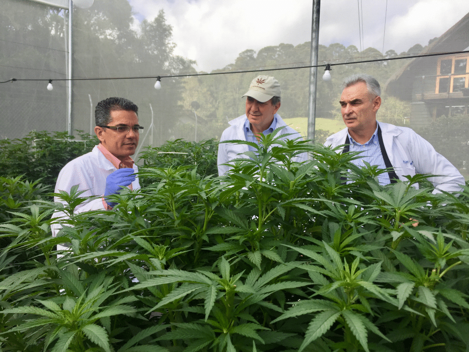 Nación Cannabis | Empresa va por cultivos de marihuana que controlaban las FARCS