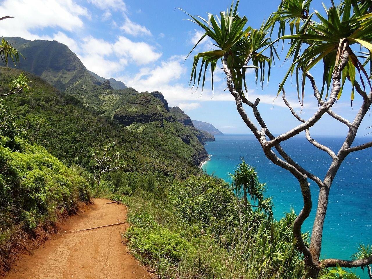 Nación Cannabis | Hawaii podría legalizar la producción y comercialización del cáñamo en 2018