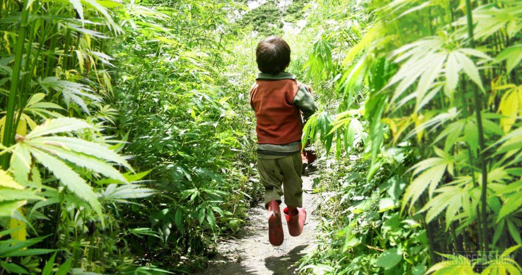 Nación Cannabis | Profesionales de la salud dispuestos a recetar cannabis medicinal a niños: estudio