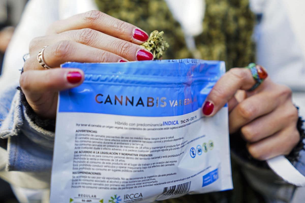 Nación Cannabis | Así es el éxito uruguayo en materia de cannabis: ya se venden aceites medicinales en farmacias