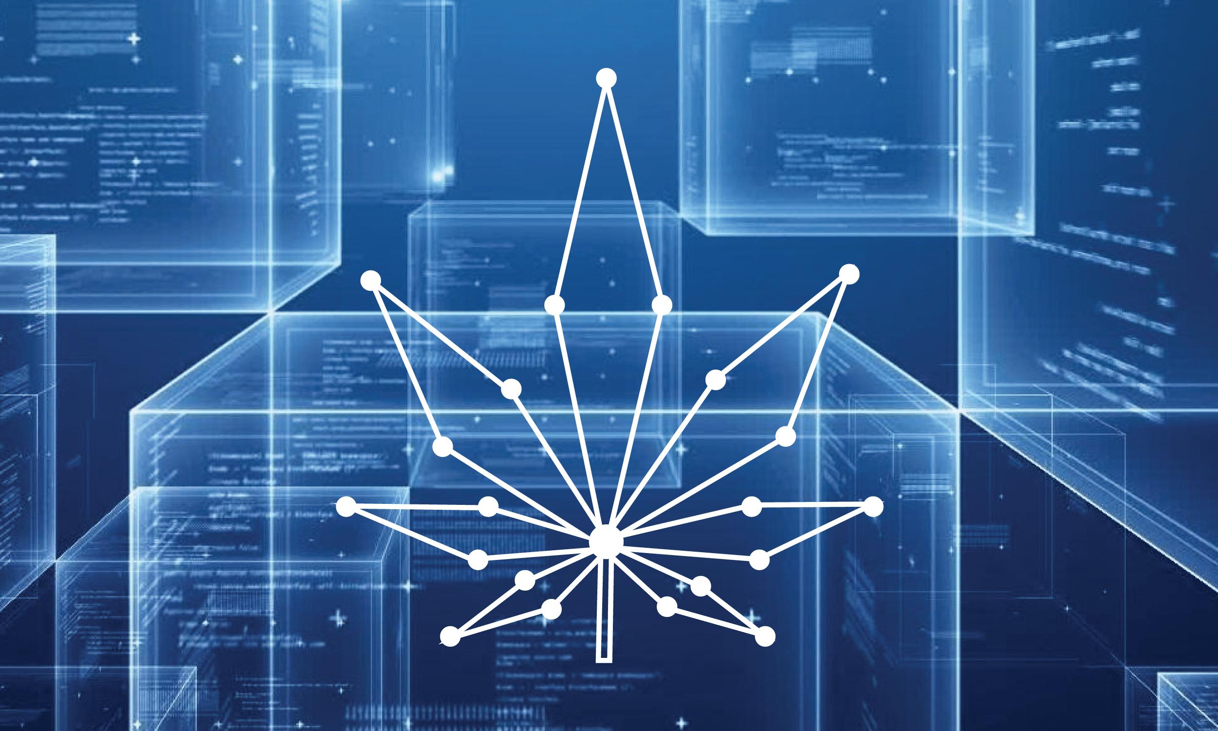 Nación Cannabis | La tecnología blockchain está ayudando a la industria de la cannabis