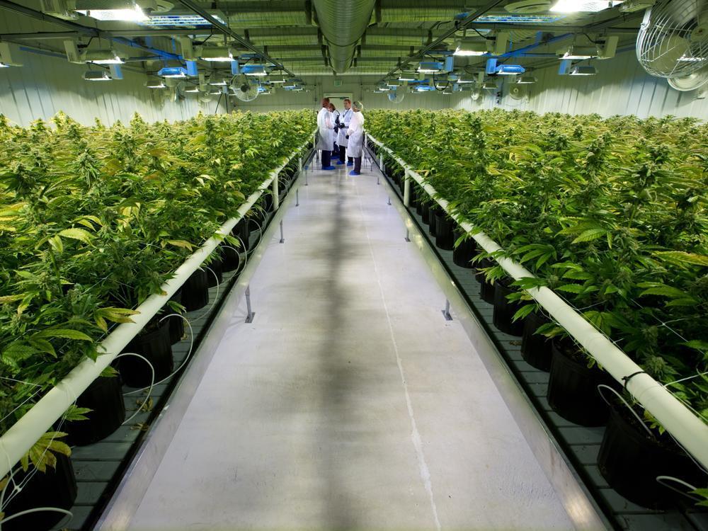 Aurora Cannabis Canadá