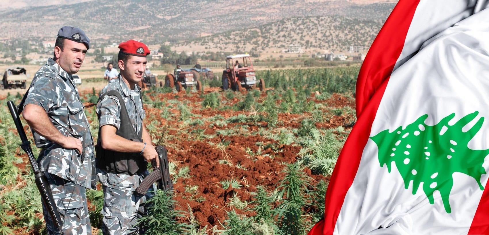 Cannabis Líbano