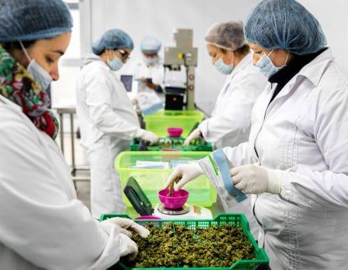 Uruguay mercado del cannabis