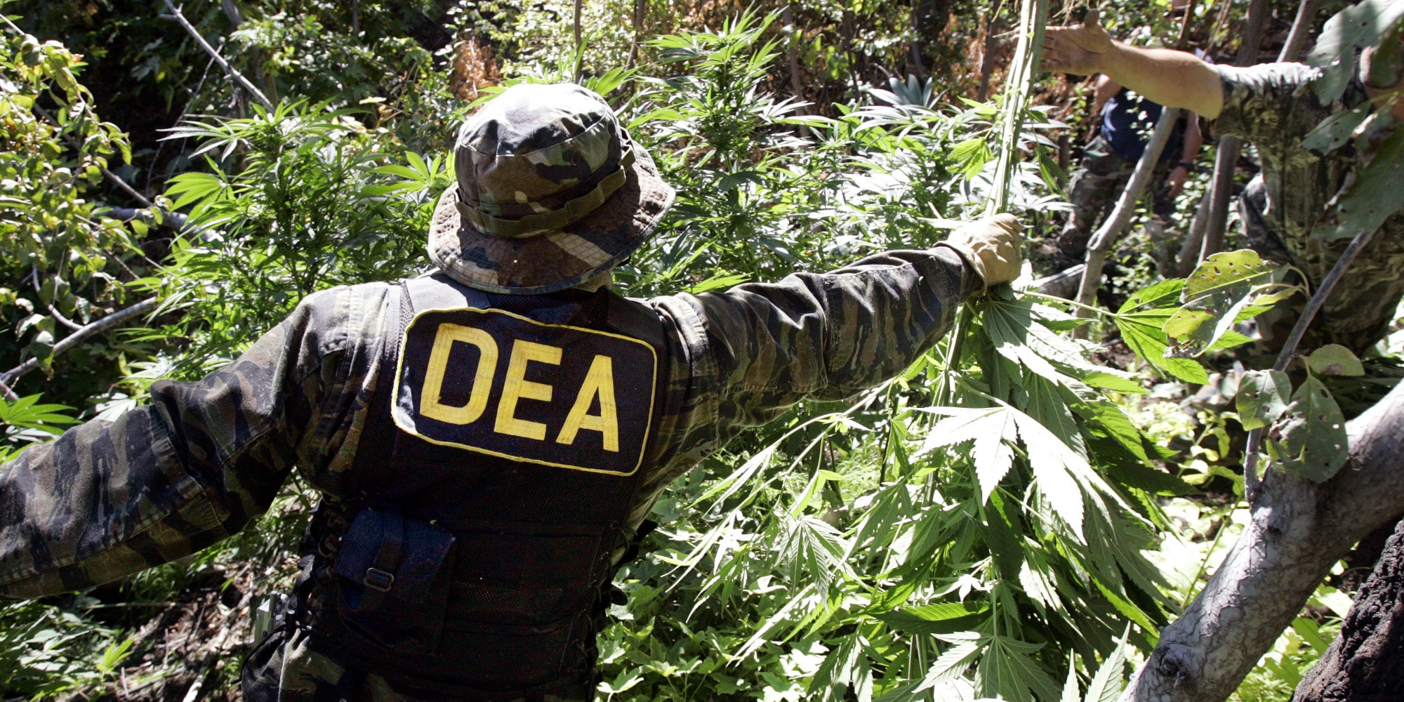 Nación Cannabis | Senado de México prioriza legalización de marihuana y amnistía