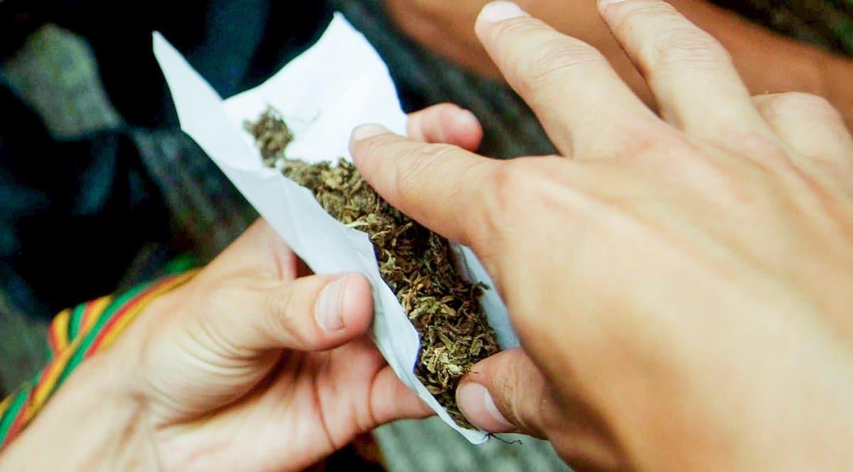 Nación Cannabis | Medicamento de cannabis combate dependencia a marihuana