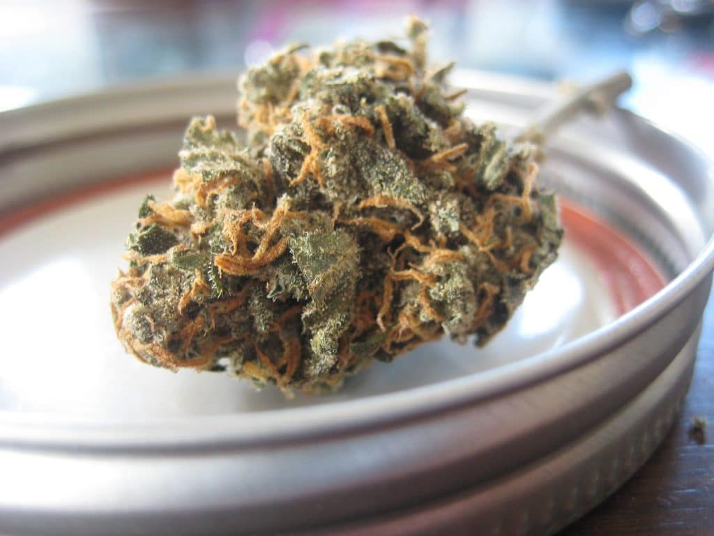 Cannabis podría reemplazar a los analgésicos opioides