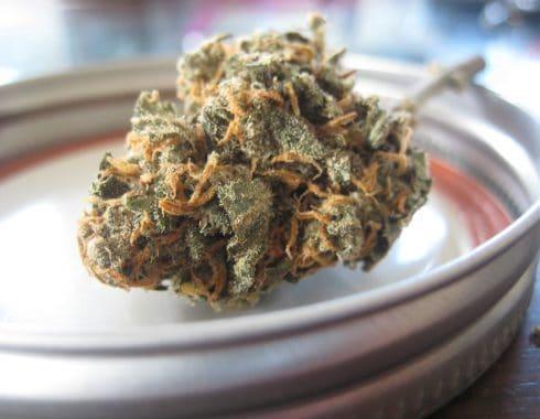 ¿La Cannabis podría reemplazar a los analgésicos opioides?