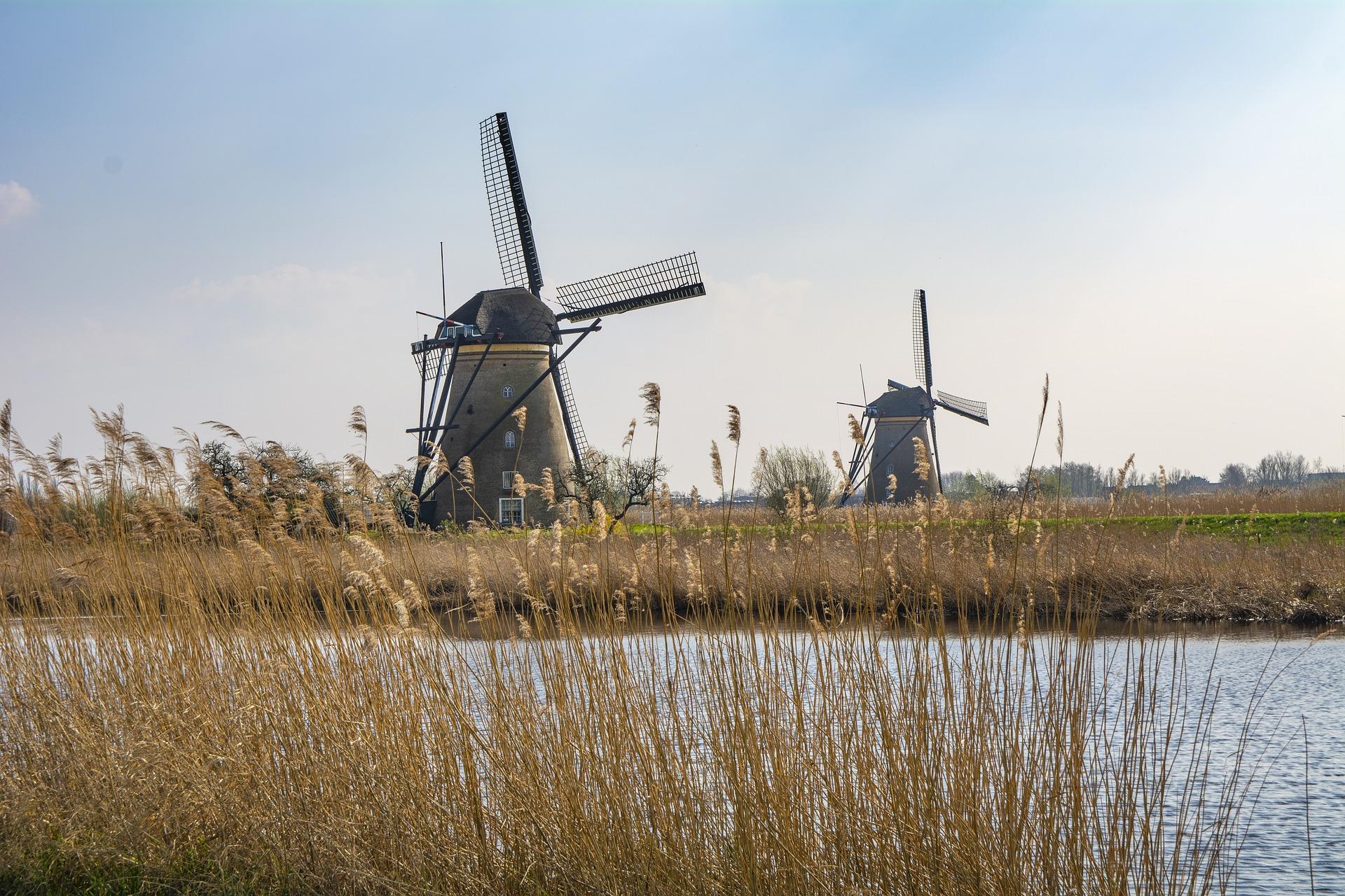 Nación Cannabis | Holanda iniciará cultivo público de cannabis