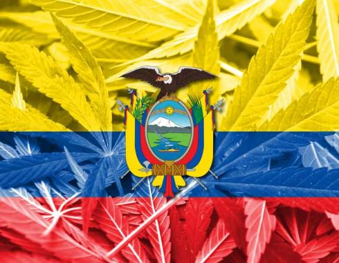 Marihuana medicinal Ecuador