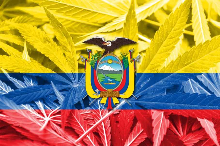 Nación Cannabis | Ecuador aprueba uso del cannabis medicinal