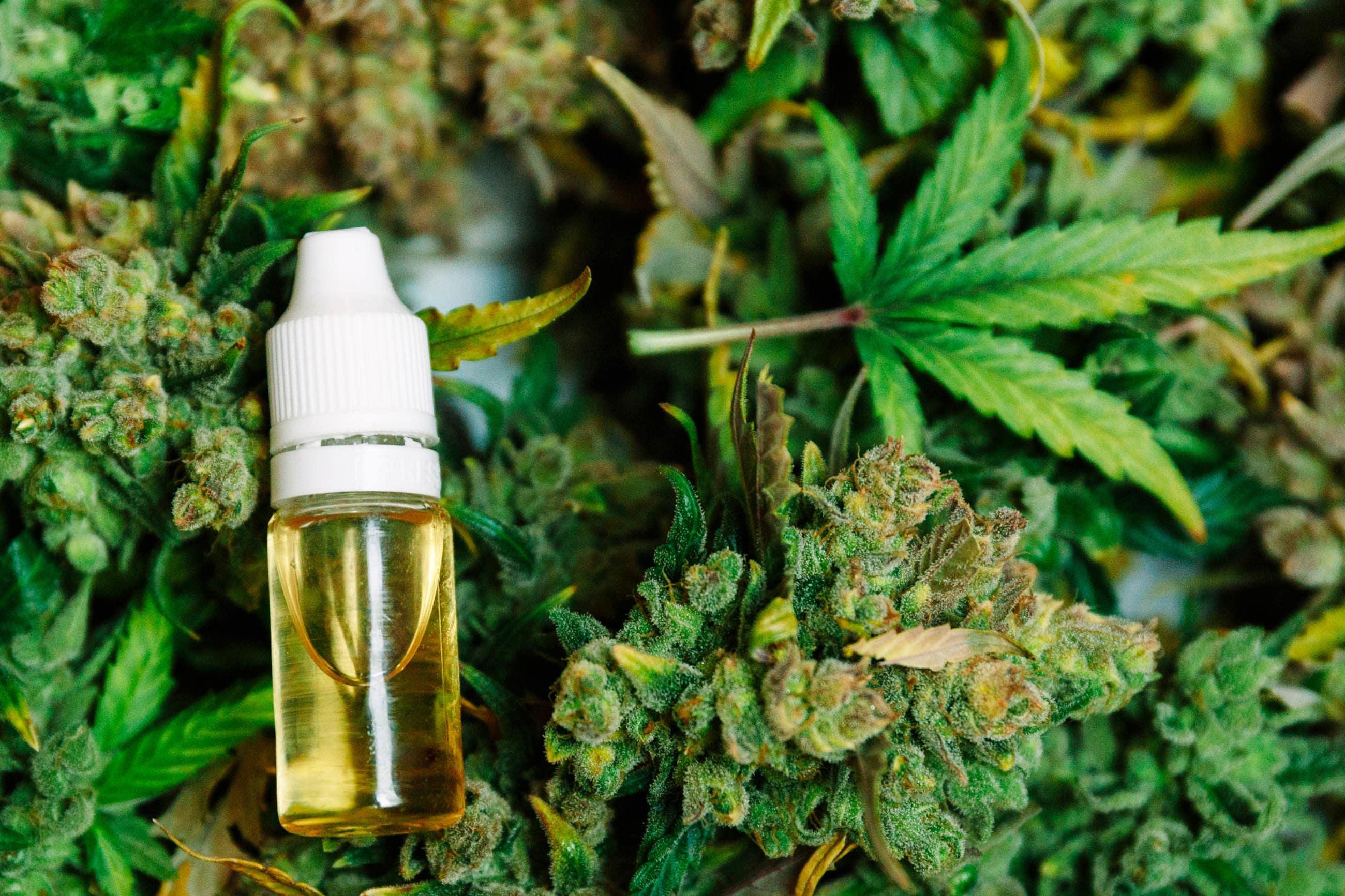 Nación Cannabis | Cómo y cuándo hablar con mis hijos sobre cannabis