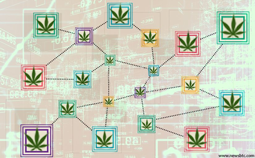 Nación Cannabis | Canadá utilizará tecnología blockchain para investigación sobre cannabis