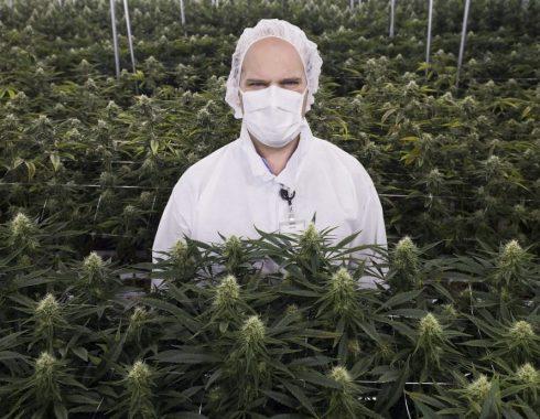 Siete empresas innovando la industria del cannabis