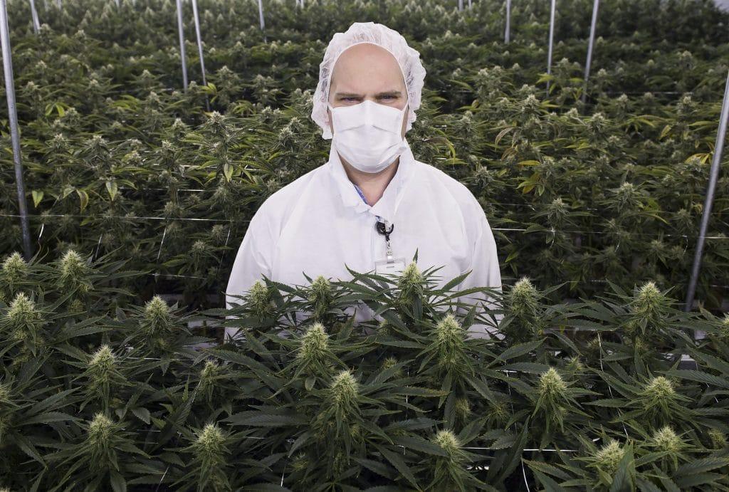 Nación Cannabis | Siete empresas innovando la industria del cannabis