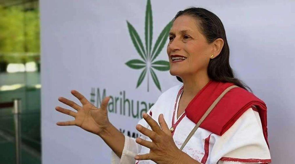 Nación Cannabis | México considerará experiencia de otros países en regulación
