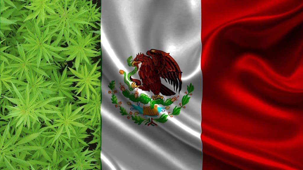 Cannabis legal podría convertir a México en potencia en 2024