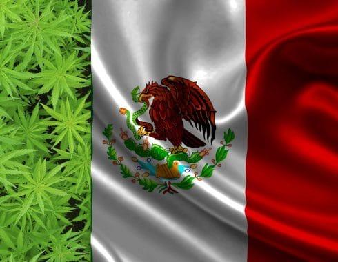 mexico-potencia-economica-cannabis