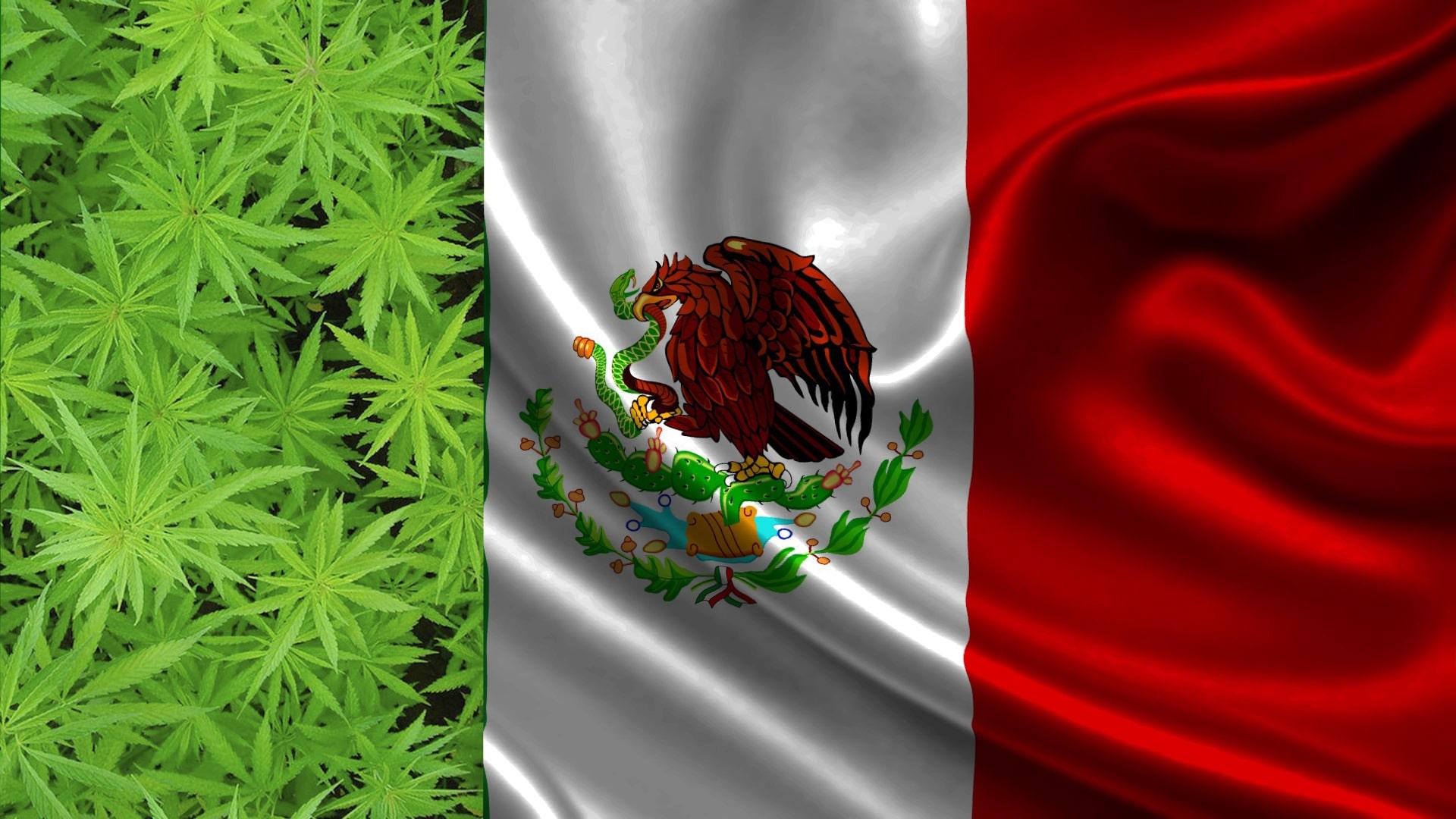 Nación Cannabis | Cannabis legal podría convertir a México en potencia en 2024