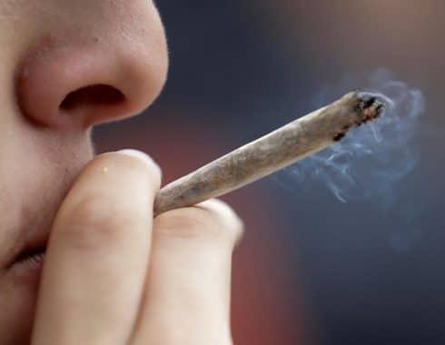 Fake news fomentan criminalización del uso del cannabis